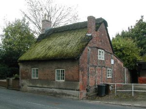 Moss growing all over a thatched cottage roof