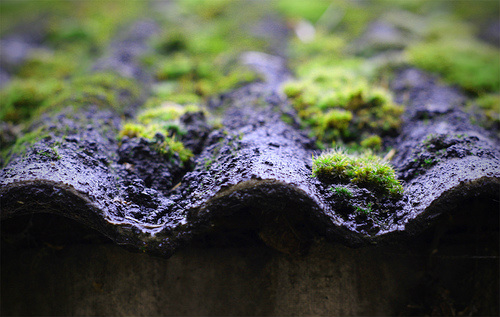 Should I Remove Moss From My Roof?