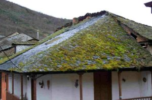 Should I Remove Moss From My Roof Ashbrook Roofing